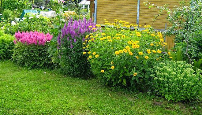 Высокорослые цветы для клумбы