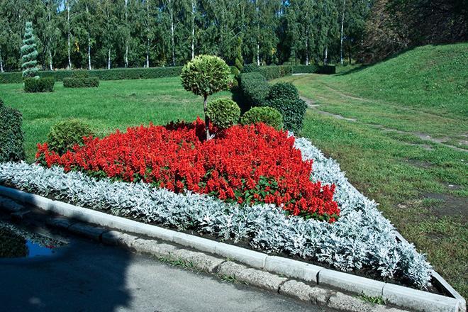 Разноуровневые цветы на клумбе