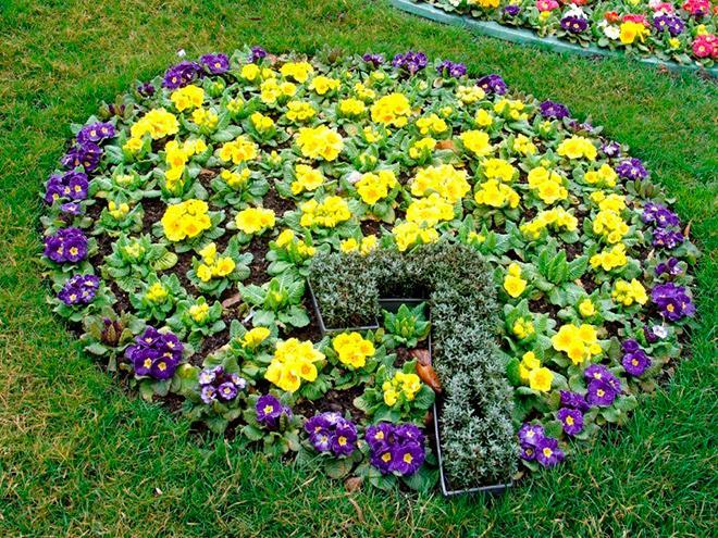 Низкорослые цветы на клумбе