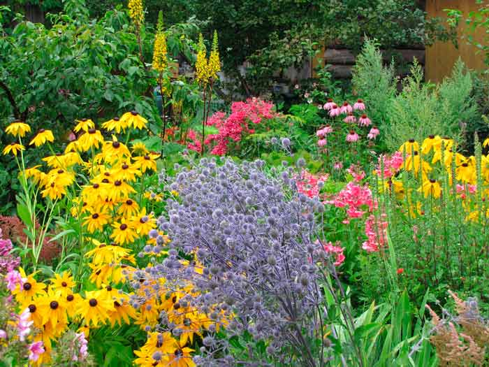 Синеголовник: описание и правила выращивания травы