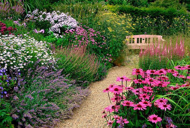 Эхинацея в саду