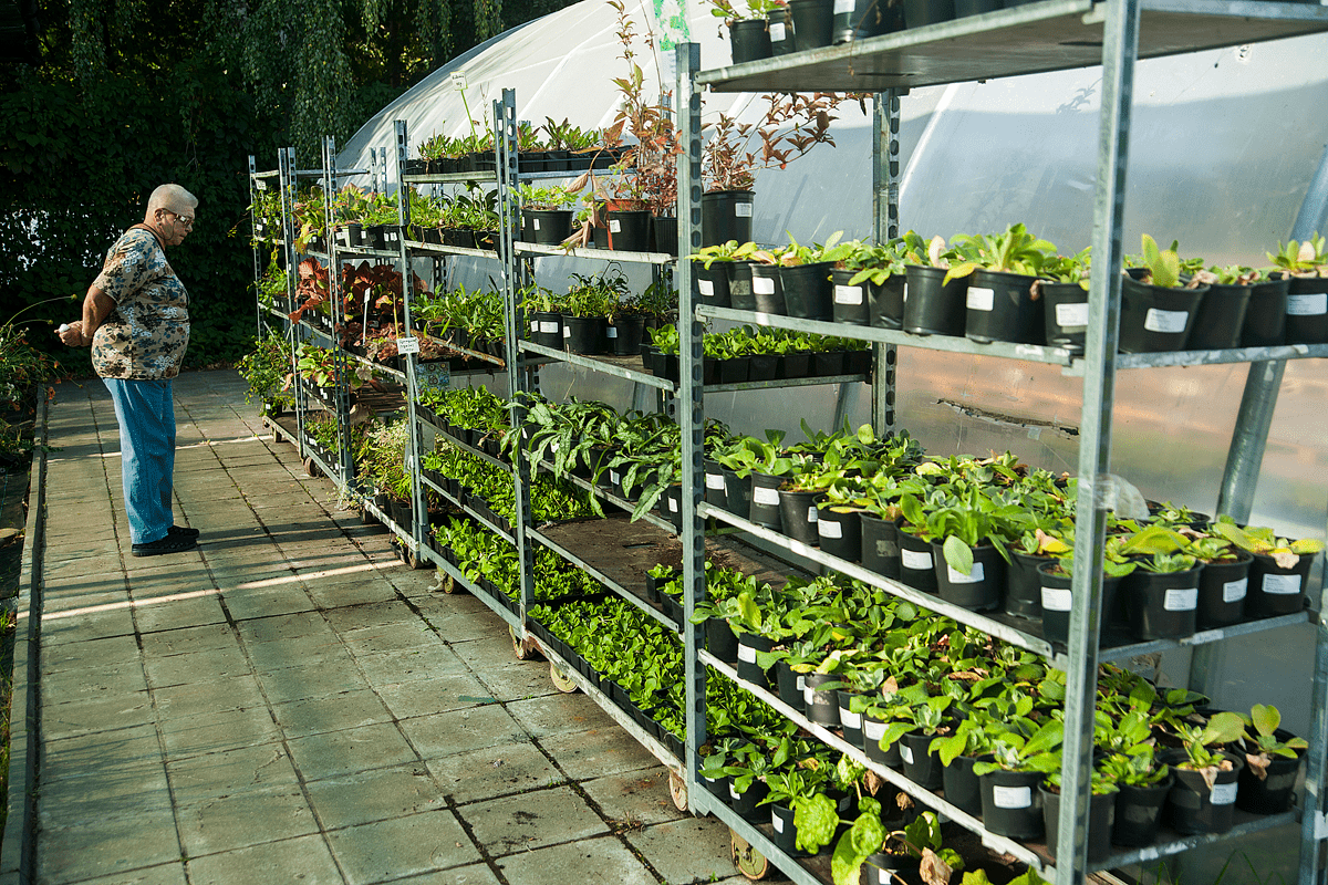 Выращивание в контейнерах