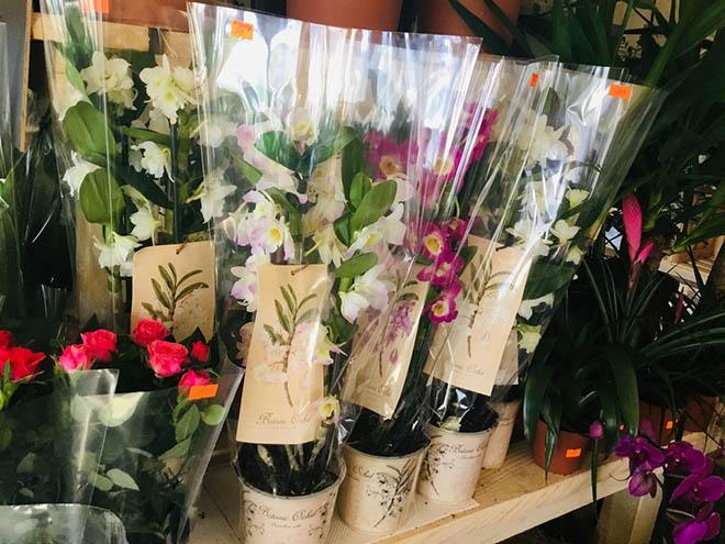 орхидея дендробиум в цветочном магазине