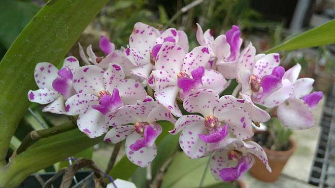 Цветы орхидеи вблизи
