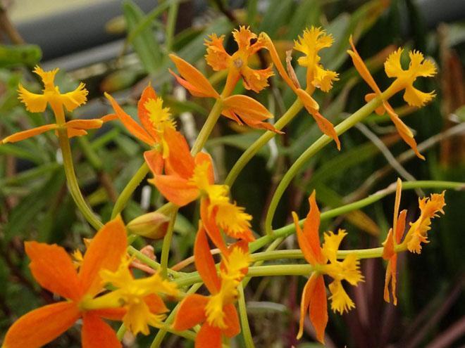 Цветы орхидеи в профиль