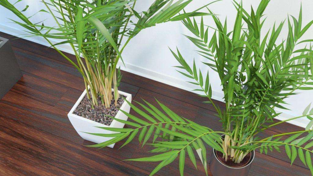 Трехтычинковая пальма