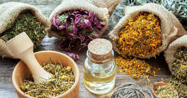 лечебные свойства сушеницы
