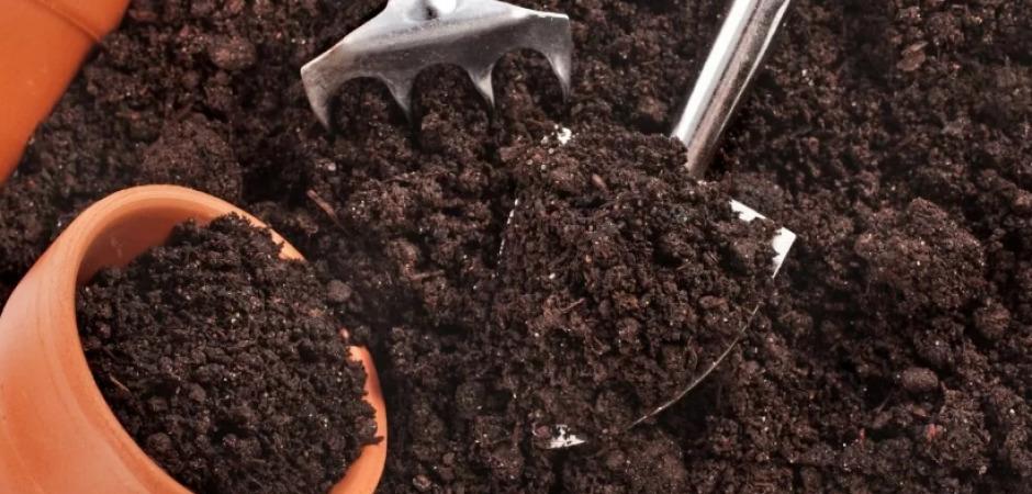 Выбор косточек винограда для выращивания
