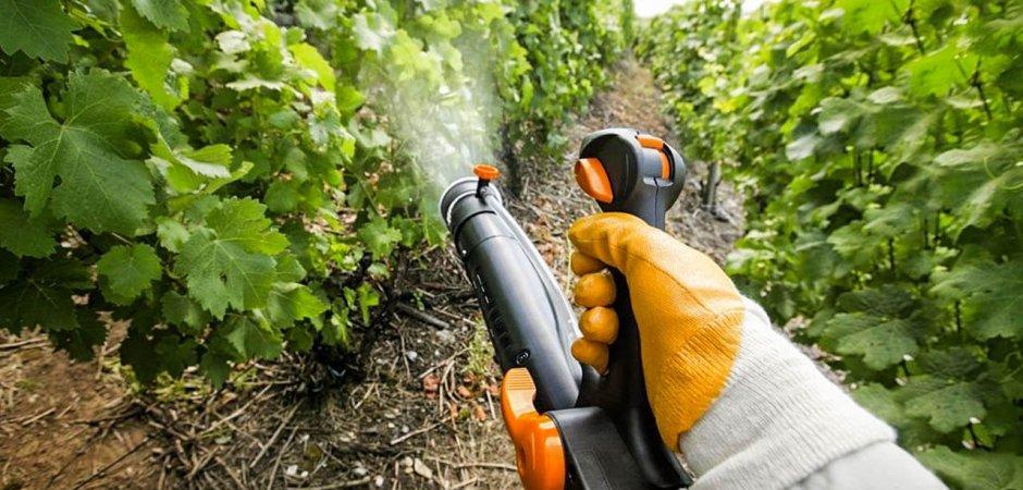 Полив винограда весной