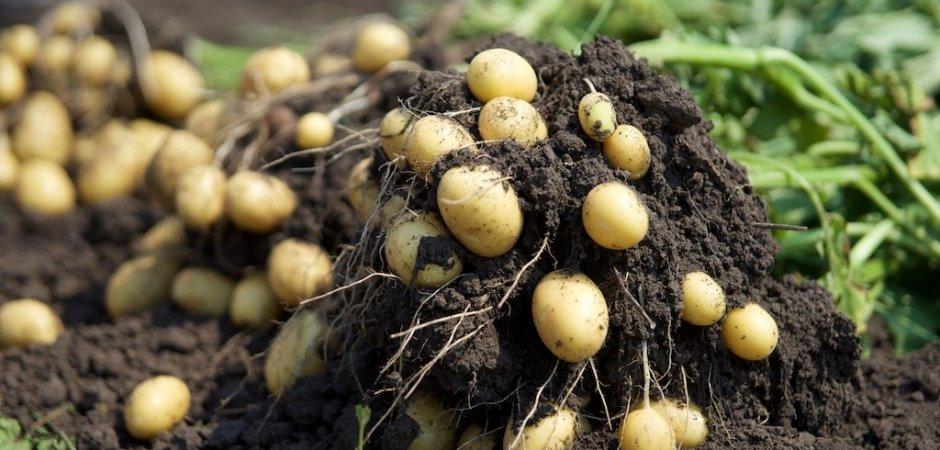 Малина: что посадить рядом, лучшие растения и влияние культур