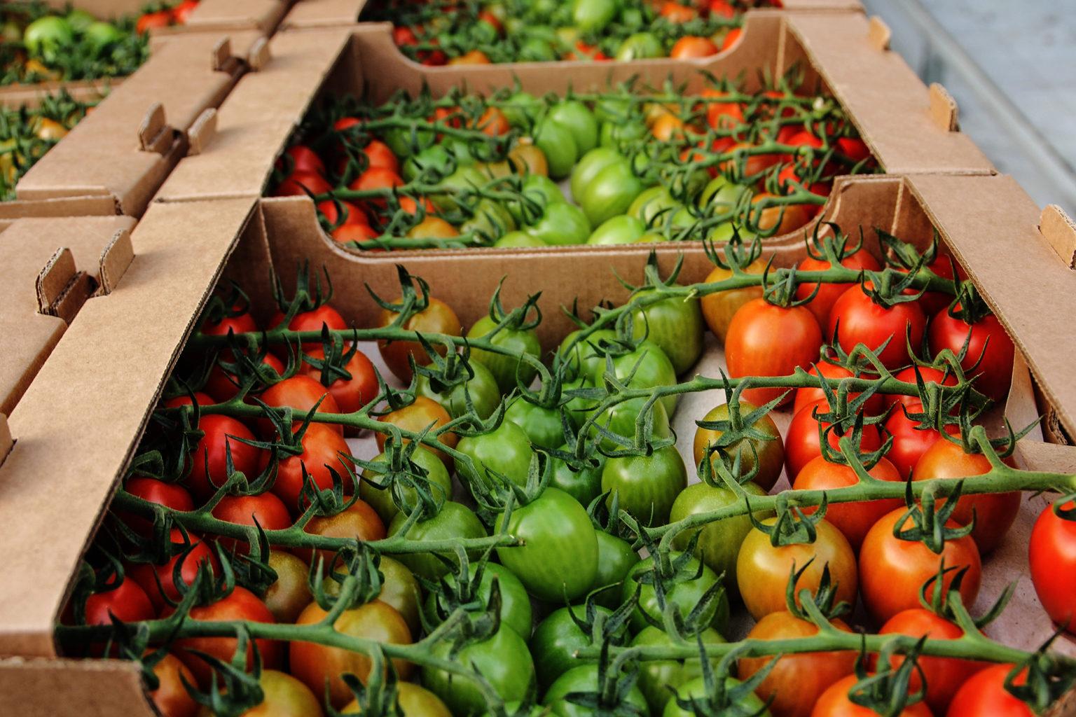Лучшие сорта овощей для теплицы