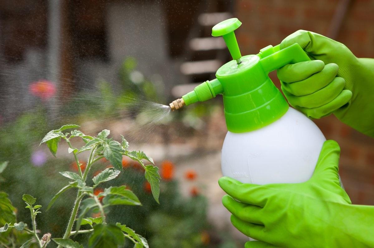 эффективные методы избавления от гусениц в теплице