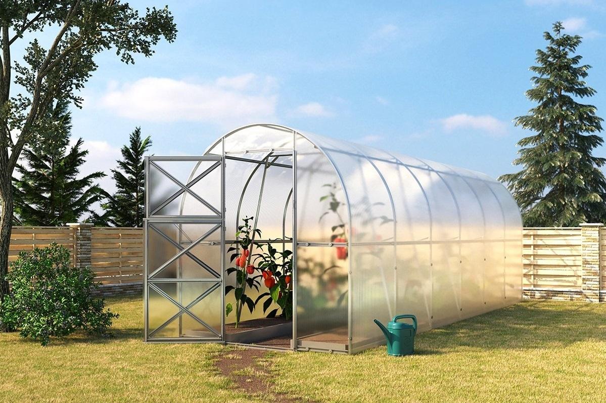 когда высаживать рассаду в теплицу из поликарбоната
