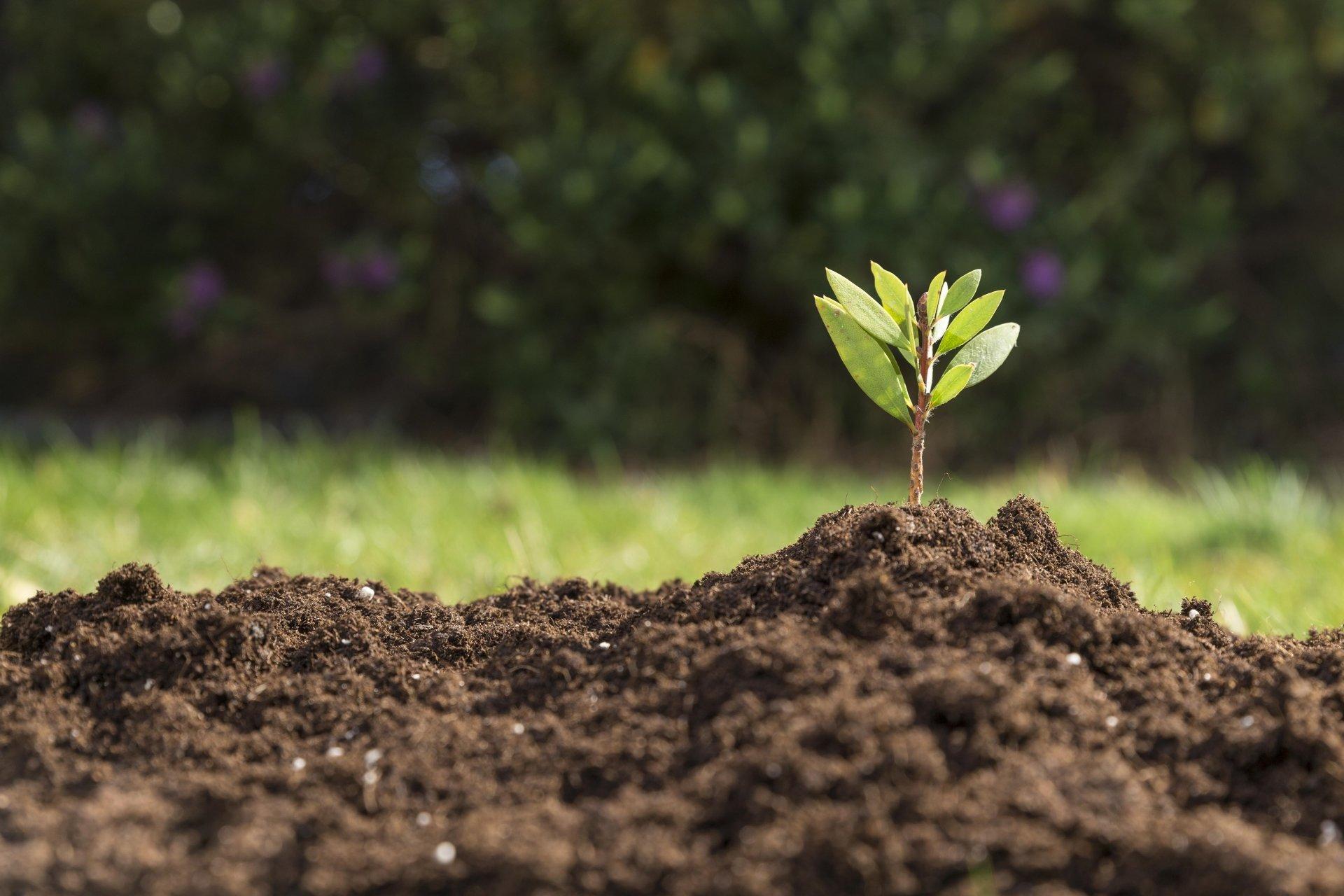 Почвы, растительность и животный мир.