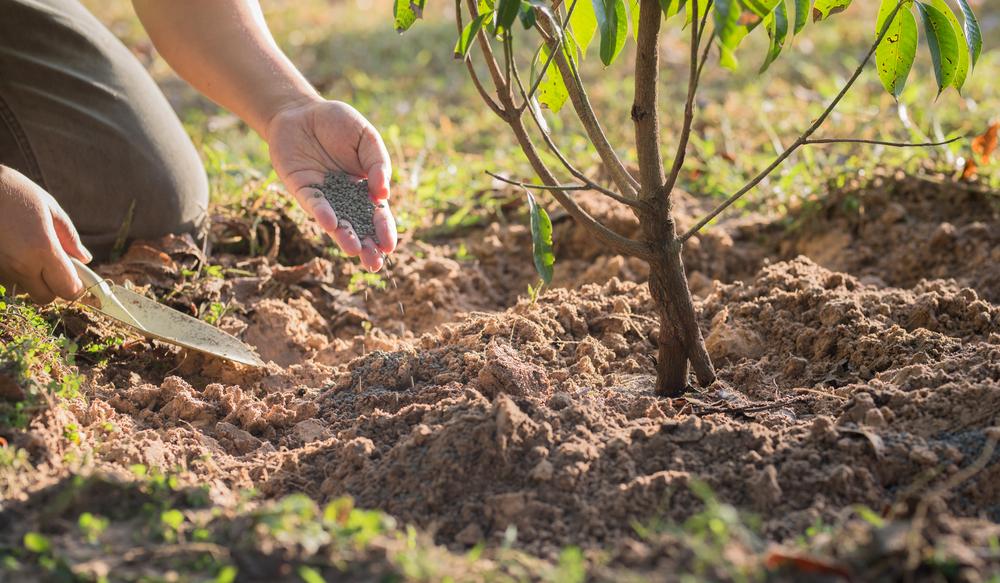 Удобрения для осенней посадки плодовых деревьев